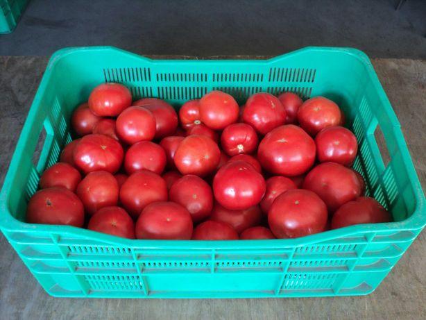 Pomidory od Producenta!!