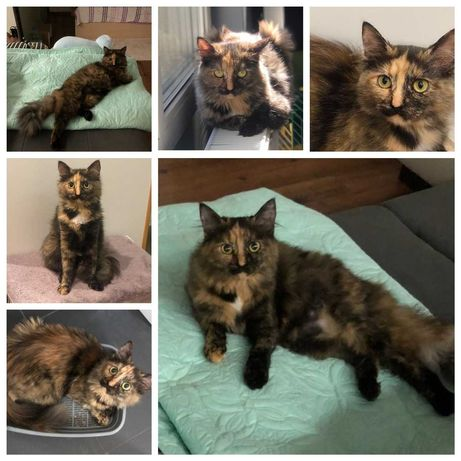 Ласковая кошечка-компаньон Совушка, кошка, 11 мес, пушистая