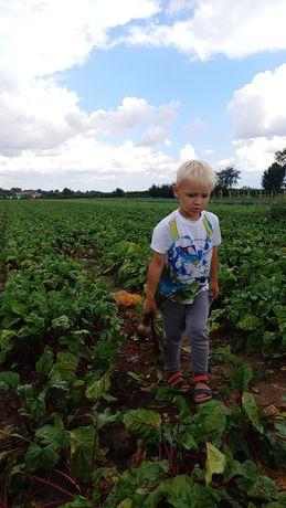 Warzywa od producenta 30 kg Wysyłka cała Polska