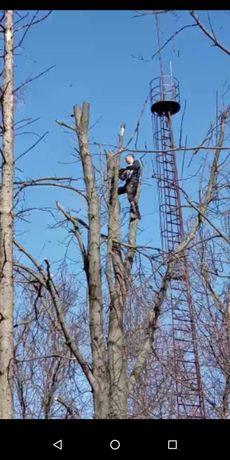 Порізка проблемних дерев