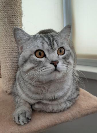 Кот ищет кошку (вязка)
