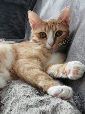 Fircyk - kot, kociak, kocur do adopcji, z darmo!