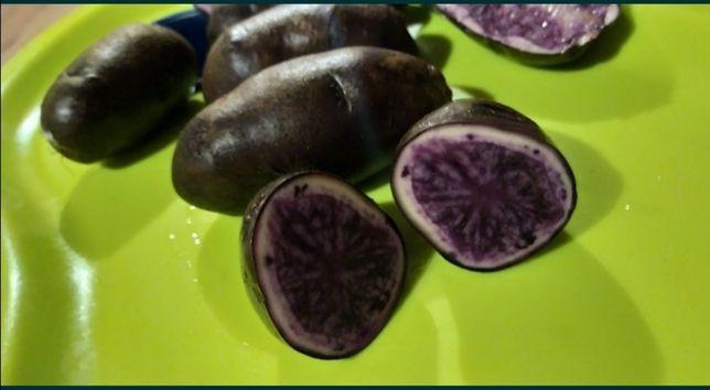 Вителот. Фиолетовый картофель.