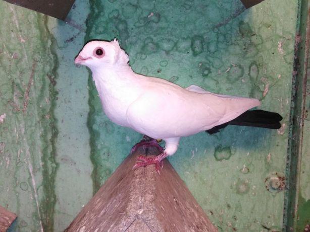 Gołębie stosy