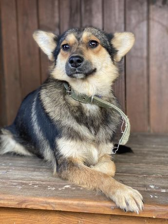 Маленькая собачка, 14 кг, 1 год, привита, стерилизована. Собака.