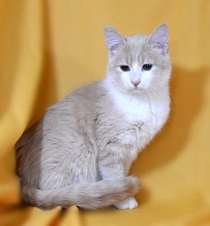 Гарний молодий кіт, розумний та чуйний Абрикос, 4.5міс., кошеня