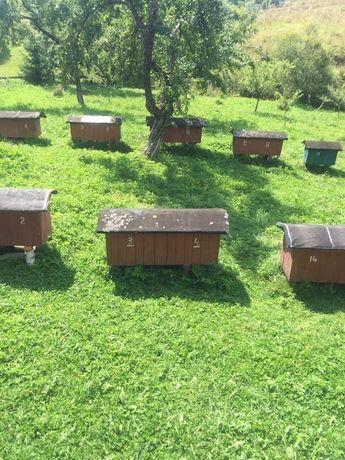 Пасіка карпатських бджіл