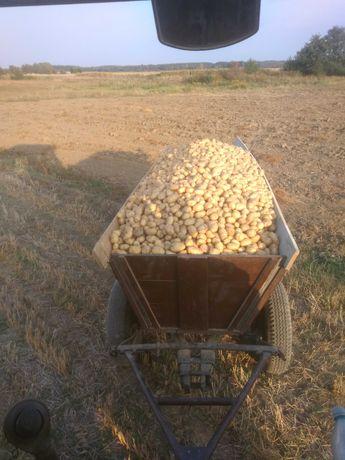 Ziemniaki Denar i Vineta