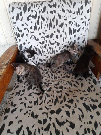 Gatos para doar zona de Esposende