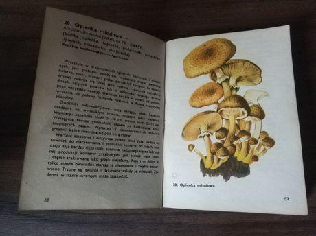 Grzyby Atlas Grzybów Leśnych, rodzaj, gatunek, nazwa, książka