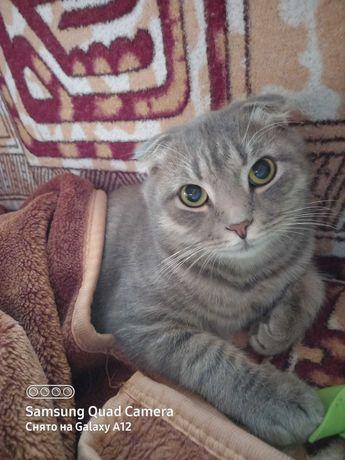 Пропал котик Мурчик