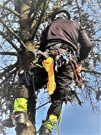 """Wycinka oraz pielęgnacja drzew """"ALPINISTYCZNIE"""" z  dostępu linowego"""