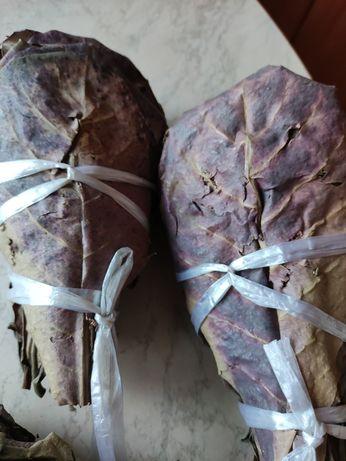 Liście ketapangu - migdałecznika