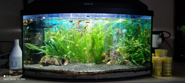 Akwarium Aquael cały zestaw+akwarium 25l kotnik