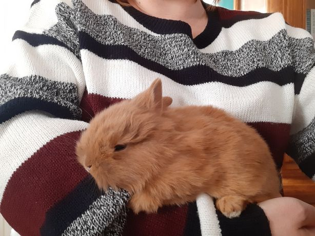 Sprzedam króliczka+klatka