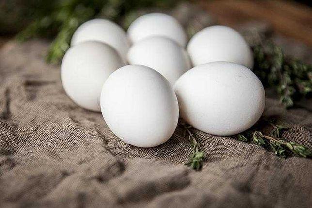 Jajka od zielononóżek