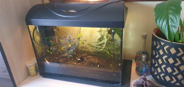 Akwarium ze sprzętem i 3 rybkami