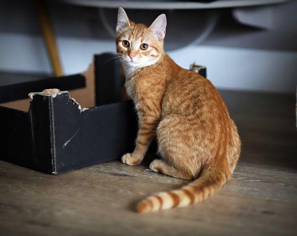 Kocie Kumpelki szukają wspólnego Domu