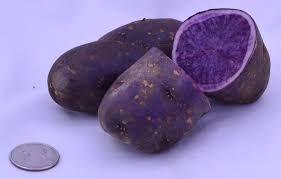 MEGA RARO - Batatas Pretas UMA ESPECIALIDADE Adaptado ao nosso clima