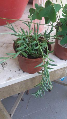 Plants 2 € cada bom preço