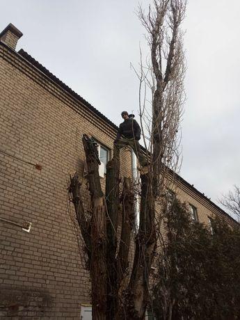 Спил от 300гр деревьев вывезу ветки колю дрова-продаю