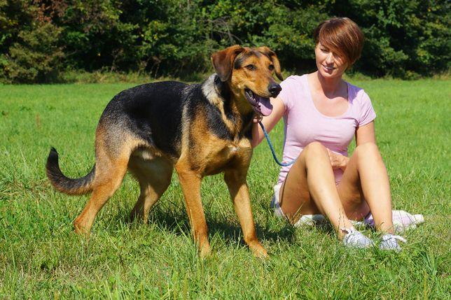 Stan - młody, piękny, energiczny pies szuka domu