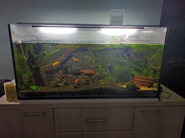Akwarium towarzyskie 250l
