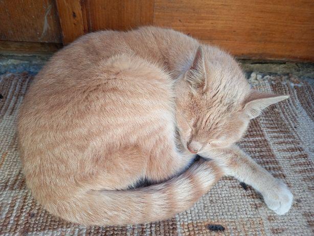 Котик молодий бежевий