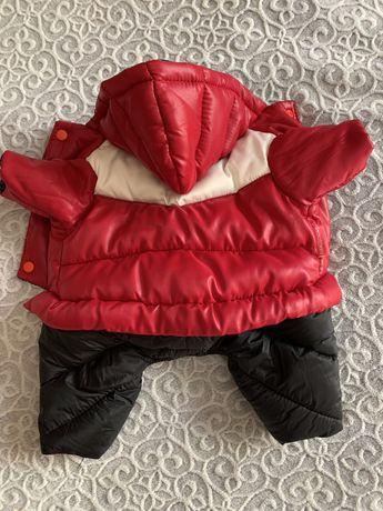Одяг на собаку, йорк, куртка зимня