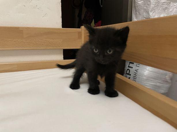 Котенок кошечка кот отдам