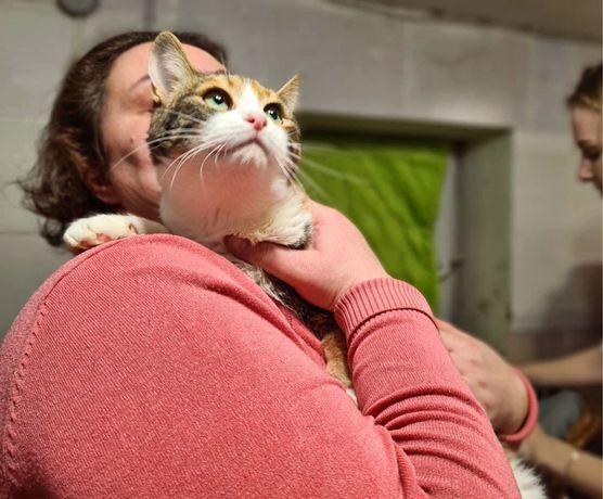 Ручная кошка, трехцветная Анталия, 7 месяцев