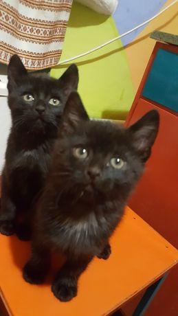 Котята, котик, кошечка