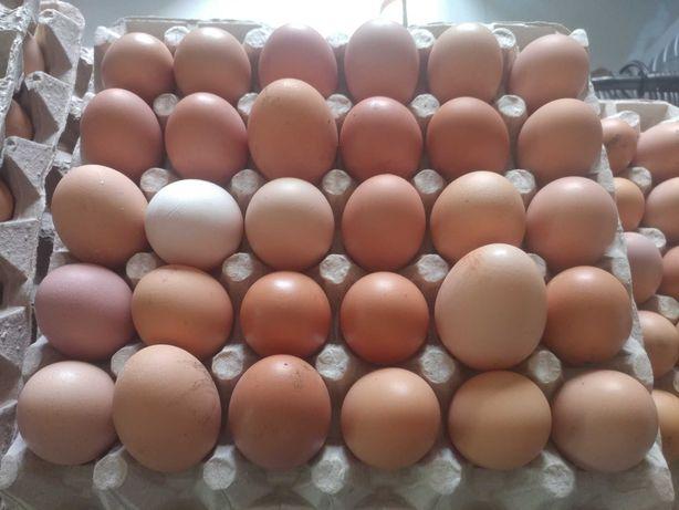 Wiejskie Świeże Jaja