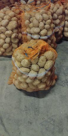 Ziemniaki młode jadalne i paszowe