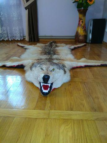 Продам шкіру вовка