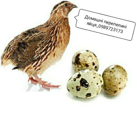 Перепілки.Перепелині яйця та м'ясо