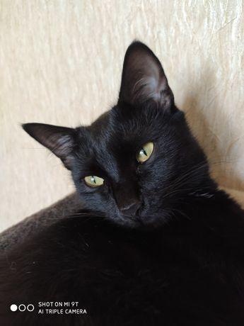Черный кот подарю