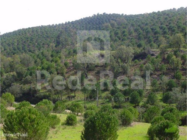 Terreno com Plantação de Pinheiros Mansos em Queimados S...
