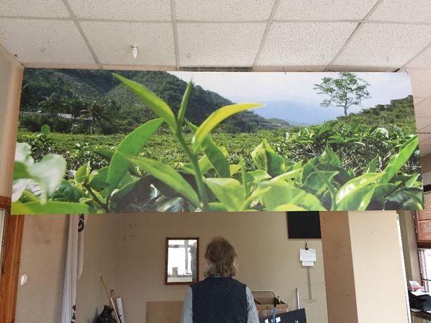Płyta PCV 3x1 m z wydrukiem pola herbacianego