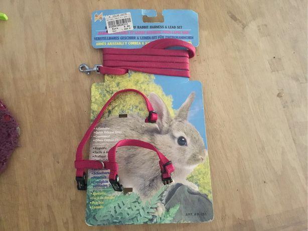 Trela para coelho anão