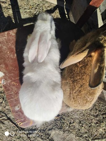 Продам кролиць та кролів