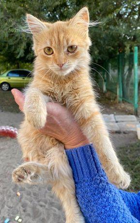 Ещё один подброшенный кото-ребенок.