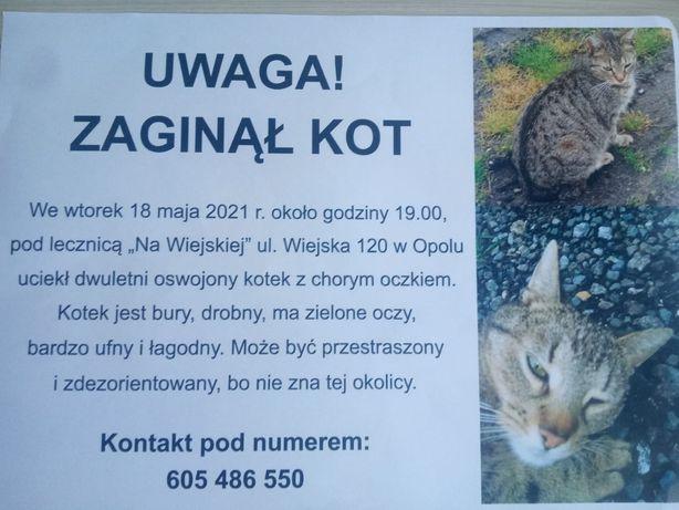 """Zaginął kotek Opole!!Ulica Wiejska 120,lecznica """"Na Wiejskiej"""""""