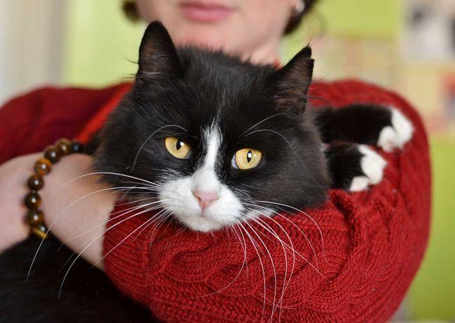 Черно-белая кошка Франческа ждет своего человека, 1 год,в хорошие руки