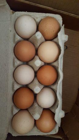 Jajka, jaja, wiejskie, swojskie, kurze, perlicze.