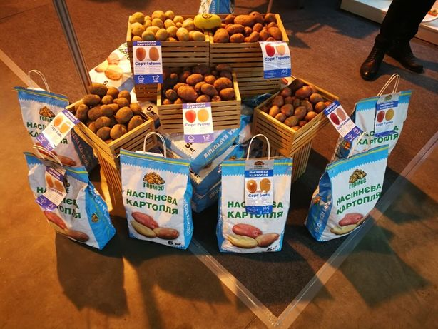 Семенной картофель IPM Насіннева картопля, картопля на посадку