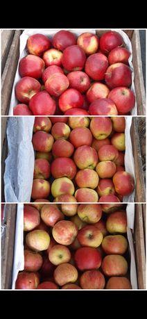 Jabłka deserowe * Chłodnia * Jonagored / Prince/ Szampion *