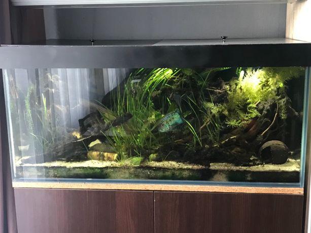 Akwarium 360l z szafą na zamówienie i dodatkami