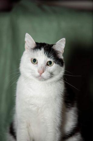 Черно белый котик Шамиль мечтает о доме. Кастрирован