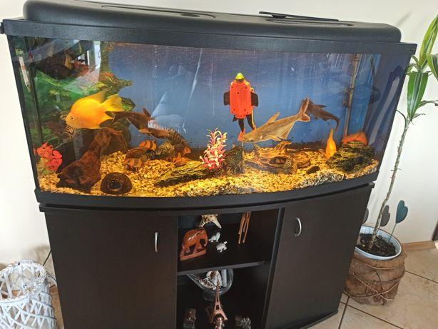 Akwarium  z rybkami ,ozdobami i szafką